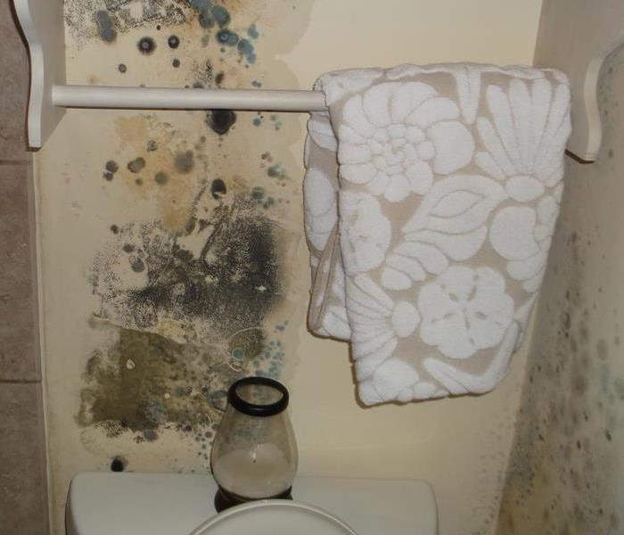 Mold Remediation Does Your South Rock County Home Have  A Mold Problem?
